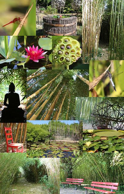 Bambouseraie d'Eyragues, Bambous en Provence